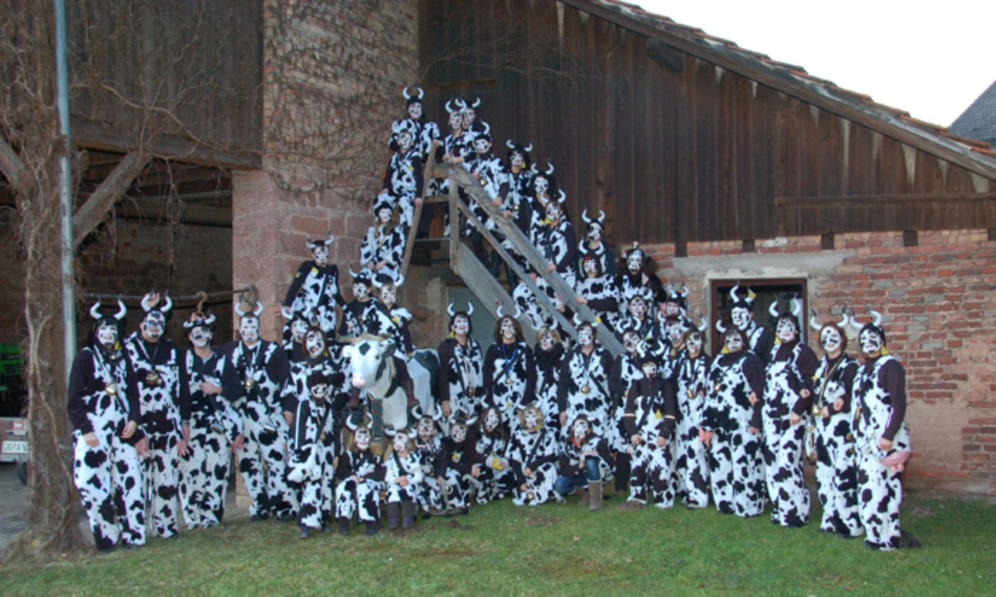Kuhbacher Kühe
